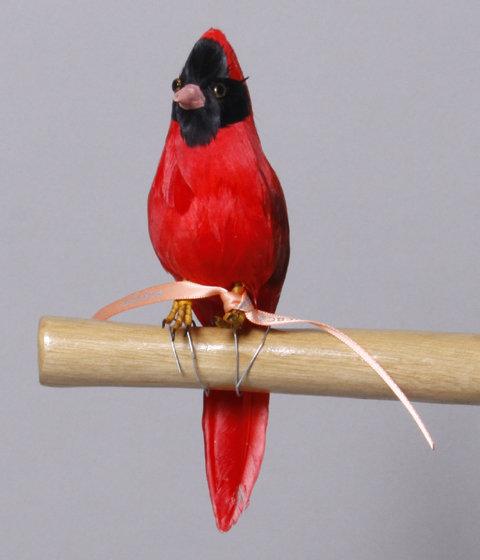 PUEBCO - Cardinal